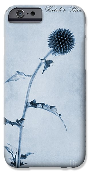 Thistle iPhone Cases - Echinops ritro Veitchs Blue Cyanotype iPhone Case by John Edwards
