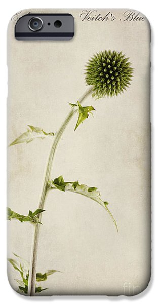 Thistle iPhone Cases - Echinops ritro Veitchs Blue iPhone Case by John Edwards
