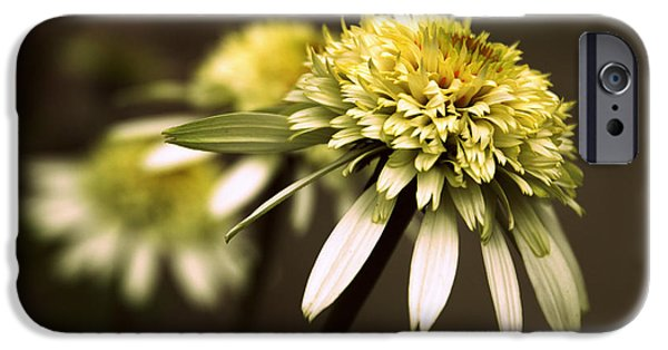 Cone Flower iPhone Cases - Echo iPhone Case by Jessica Jenney