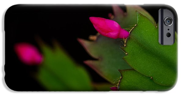 Christmas Photographs iPhone Cases - Echoing Christmas Cactus Buds iPhone Case by Rona Black