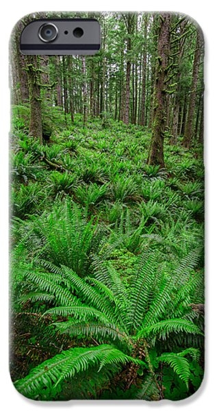 Forest Floor iPhone Cases - Ecola Ferns iPhone Case by Rick Berk