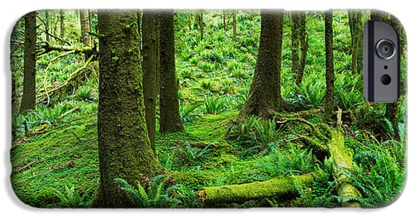 Forest iPhone Cases - Ecola Forest Oregon iPhone Case by Steve Gadomski