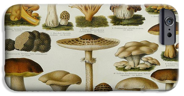 Granulatus iPhone Cases - Edible Mushrooms iPhone Case by Science Source