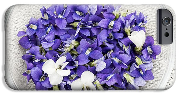 Violet iPhone Cases - Edible violets  iPhone Case by Elena Elisseeva