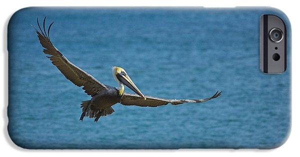 Sea Birds iPhone Cases - Effortlessly iPhone Case by Joel P Black