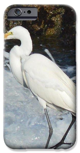 Sea Birds Digital Art iPhone Cases - Egert Detail iPhone Case by Barbara Snyder