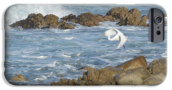 Sea Birds Digital Art iPhone Cases - Egert In Flight iPhone Case by Barbara Snyder
