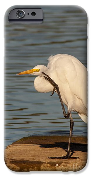 Cabin Window iPhone Cases - Egret Has A Thought iPhone Case by Robert Frederick
