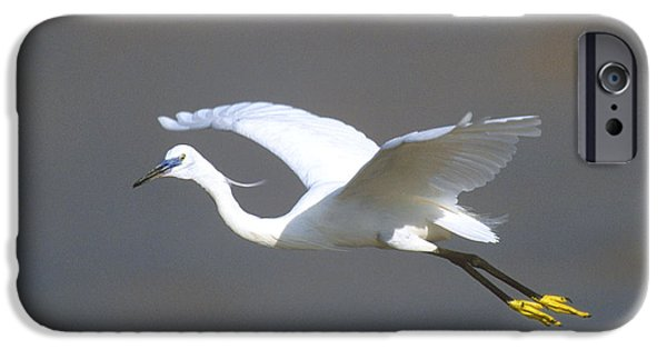 Aviary iPhone Cases - Egret In Flight Kenya Africa iPhone Case by Panoramic Images