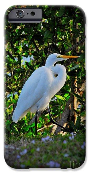 Flight iPhone Cases - Egret in the bush iPhone Case by Quinn Sedam