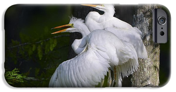 Baby Bird iPhone Cases - Egret Nestlings in a Cypress Swamp iPhone Case by Bonnie Barry