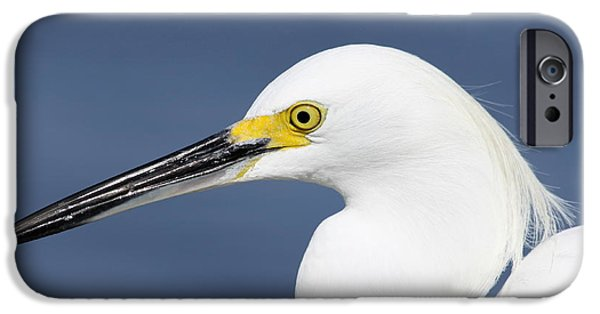 Sea Birds iPhone Cases - Egretta Portrait iPhone Case by Christiane Schulze Art And Photography