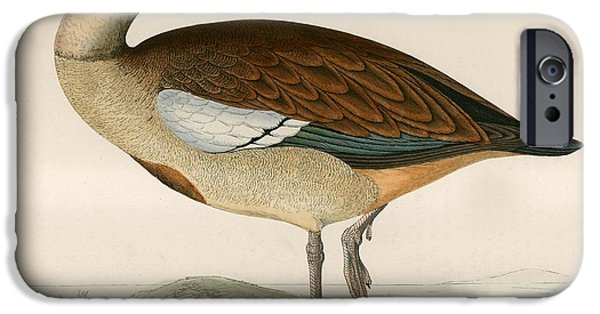 Hunting Bird iPhone Cases - Egyptian Goose iPhone Case by Beverley R. Morris