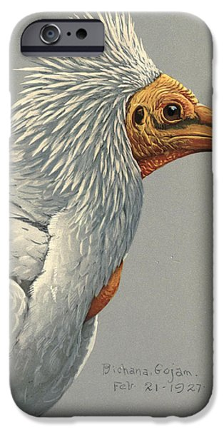 Ethiopia iPhone Cases - Egyption Vulture iPhone Case by Louis Agassiz Fuertes