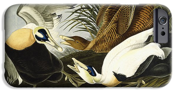 Feather Drawings iPhone Cases - Eider Ducks iPhone Case by John James Audubon