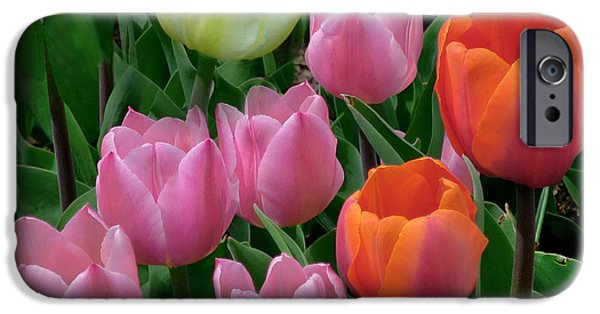 Springtime In The Park iPhone Cases - Eight Tulips and One Bee iPhone Case by Muriel Levison Goodwin