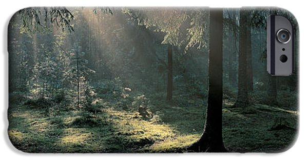 Forest Floor iPhone Cases - Ekero Uppland Sweden iPhone Case by Panoramic Images