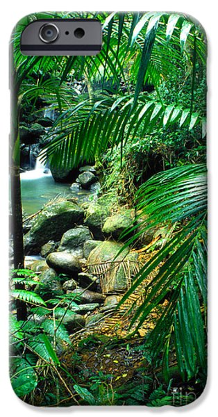 El Yunque Palm Trees and Waterfall iPhone Case by Thomas R Fletcher