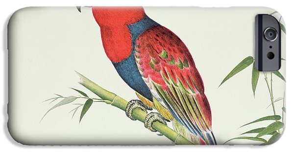 On Paper Paintings iPhone Cases - Electus Parrot on a Bamboo Shoot iPhone Case by Chinese School