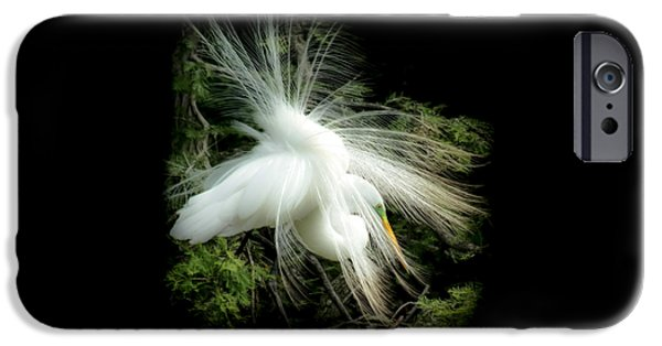 Animals Photographs iPhone Cases - ELEGANCE of CREATION iPhone Case by Karen Wiles