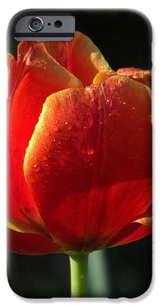 Elegance of Spring iPhone Case by KAREN WILES