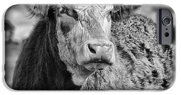 Animal Artwork iPhone Cases - Elegant Cow iPhone Case by John Farnan