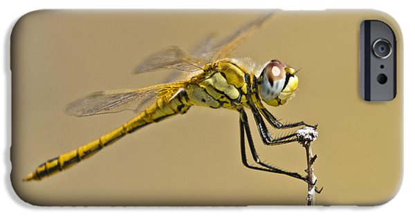 Zoologic iPhone Cases - Elegant Dragonfly iPhone Case by Heiko Koehrer-Wagner