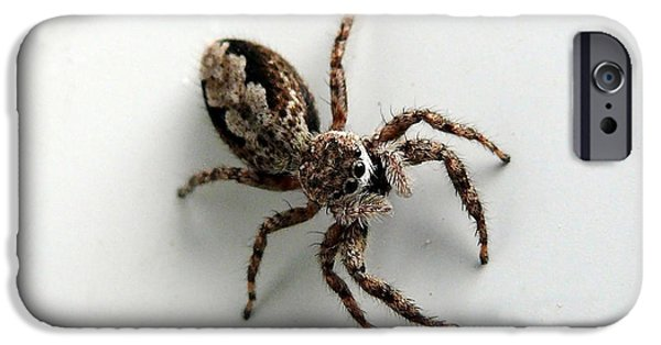 Jumping Spiders iPhone Cases - Elegant Jumping Spider iPhone Case by Christina Rollo