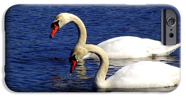 Mashpee iPhone Cases - Elegant Swan Pair  iPhone Case by CapeScapes Fine Art Photography
