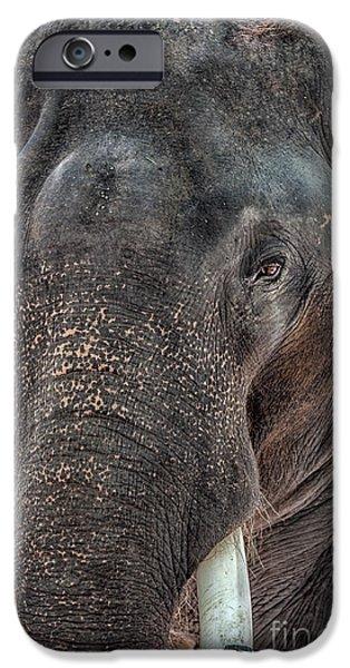 Elephants iPhone Cases - Elephant iPhone Case by Adrian Evans