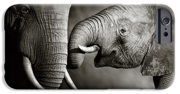 Elephants Photographs iPhone Cases - Elephant affection iPhone Case by Johan Swanepoel