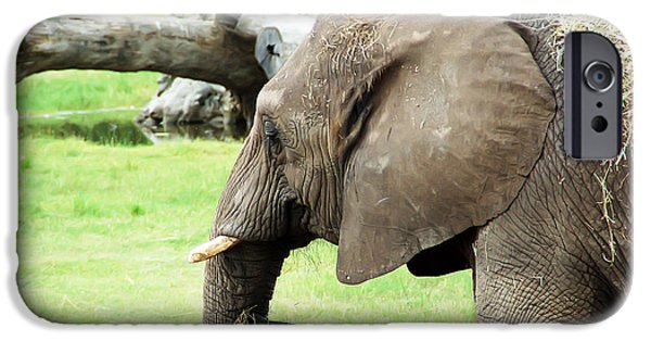 Elephants iPhone Cases - Elephant iPhone Case by Aimee L Maher Photography and Art