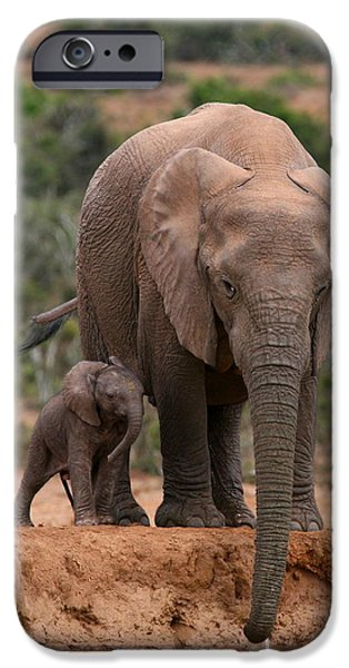 Elephant iPhone Cases - Elephant And Calf At Waterhole iPhone Case by Bruce J Robinson
