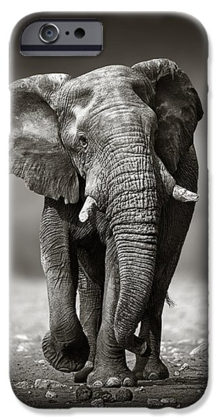 Nobody Photographs iPhone Cases - Elephant approach from the front iPhone Case by Johan Swanepoel