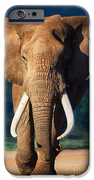 Elephants Photographs iPhone Cases - Elephant approaching iPhone Case by Johan Swanepoel
