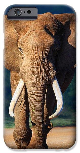 Elephant approaching iPhone Case by Johan Swanepoel