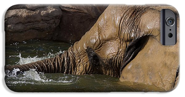 Elephant iPhone Cases - Elephant Bath iPhone Case by Ernie Echols