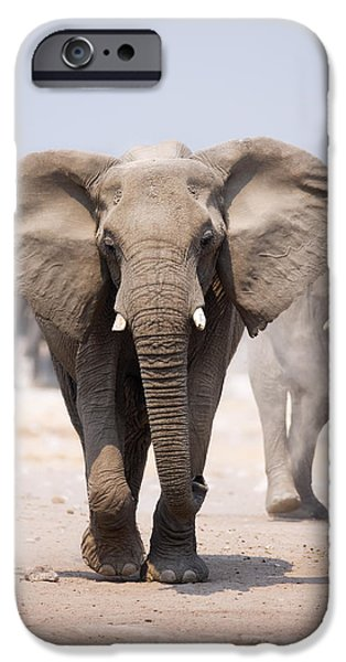 Wild Animals iPhone Cases - Elephant bathing iPhone Case by Johan Swanepoel