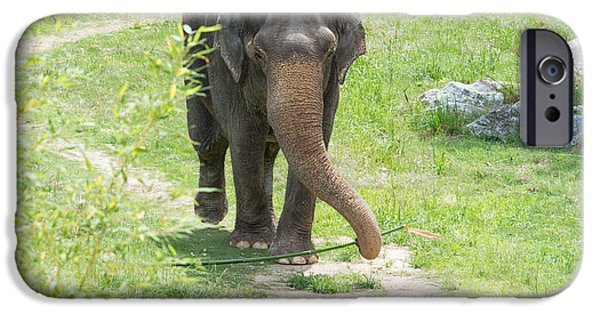 Smithsonian National Zoological Park iPhone Cases - Elephant iPhone Case by Carol Ailles