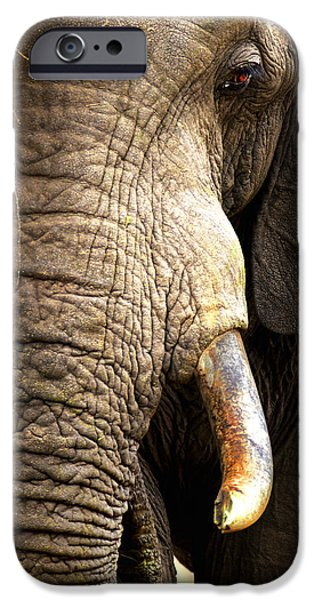 Close iPhone Cases - Elephant close-up portrait iPhone Case by Johan Swanepoel