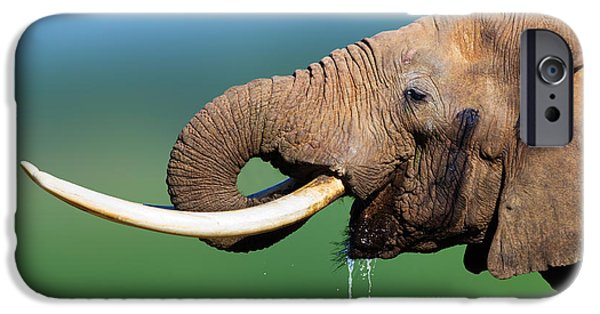 Profile iPhone Cases - Elephant drinking water iPhone Case by Johan Swanepoel