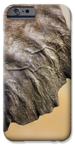 Ears iPhone Cases - Elephant ear close-up iPhone Case by Johan Swanepoel
