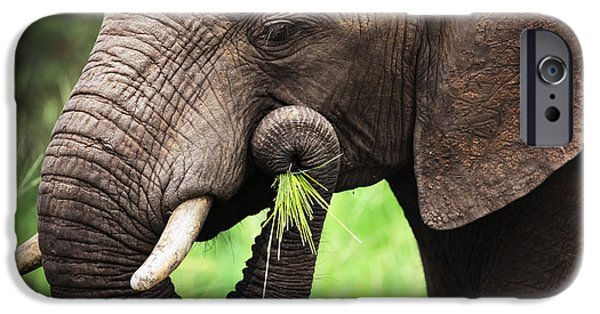 Mouth iPhone Cases - Elephant eating close-up iPhone Case by Johan Swanepoel