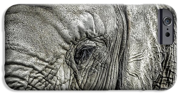 Elephants Photographs iPhone Cases - Elephant iPhone Case by Elena Elisseeva
