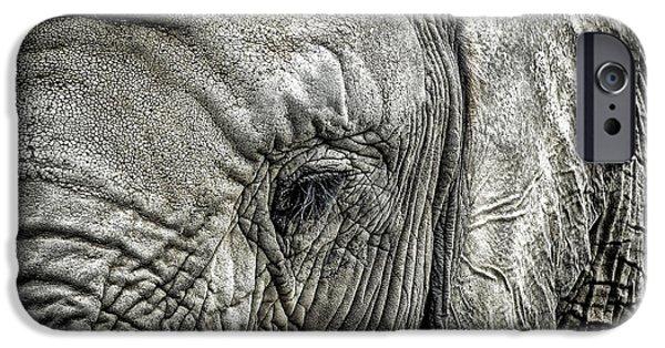 Macro iPhone Cases - Elephant iPhone Case by Elena Elisseeva