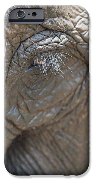 Elephant Eye Chiang Mai, Thailand iPhone Case by Stuart Corlett