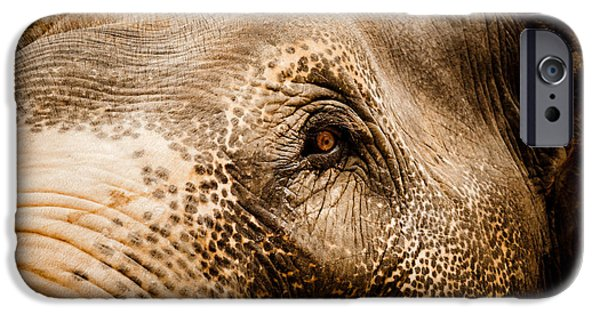 Tibetan Buddhism iPhone Cases - Elephant eye iPhone Case by Raimond Klavins