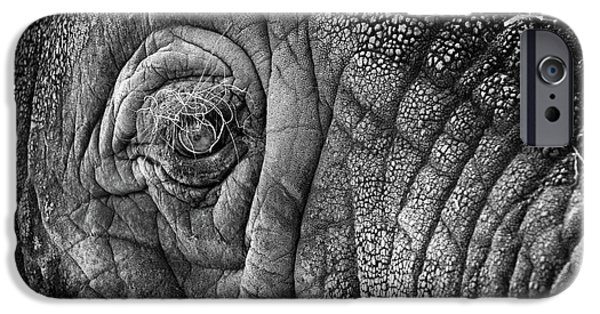 Elephants Photographs iPhone Cases - Elephant Eye iPhone Case by Sebastian Musial