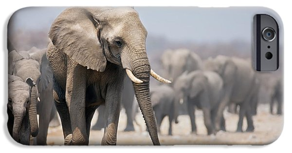 Herd iPhone Cases - Elephant feet iPhone Case by Johan Swanepoel