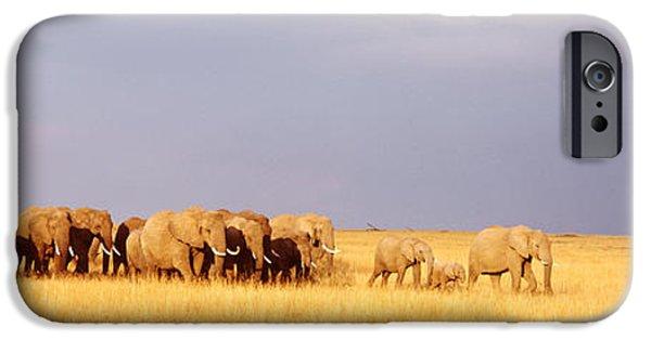 Elephants iPhone Cases - Elephant Herd, Maasai Mara Kenya iPhone Case by Panoramic Images